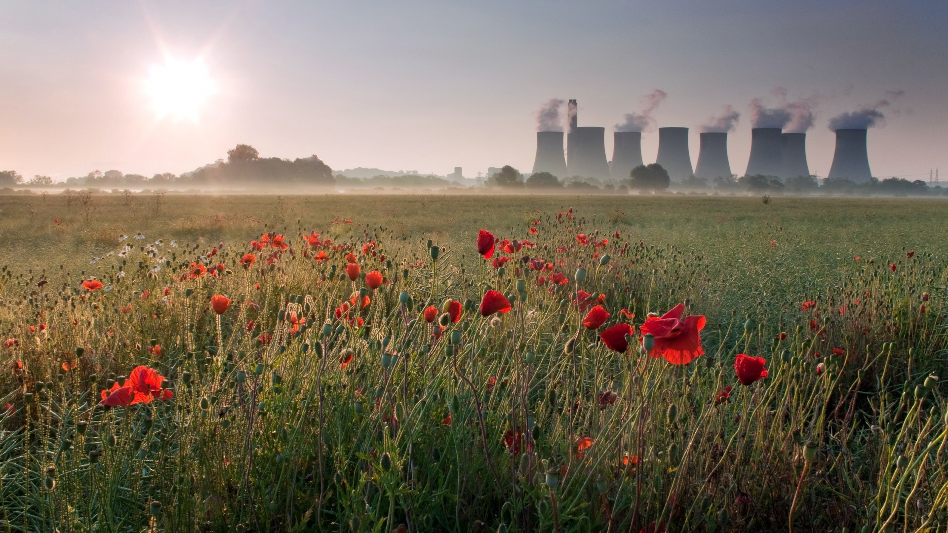 poppy_fields_near_power_plan